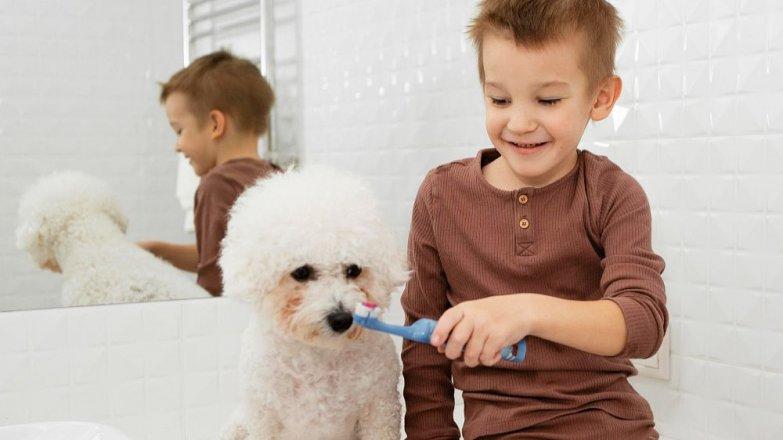 Víte, jak správně pečovat o zuby psa?