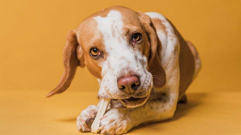 5 častých mýtů o psím stravování