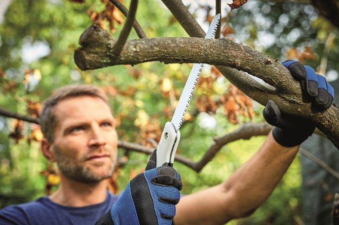 5 rad, jak ořezávat dřeviny