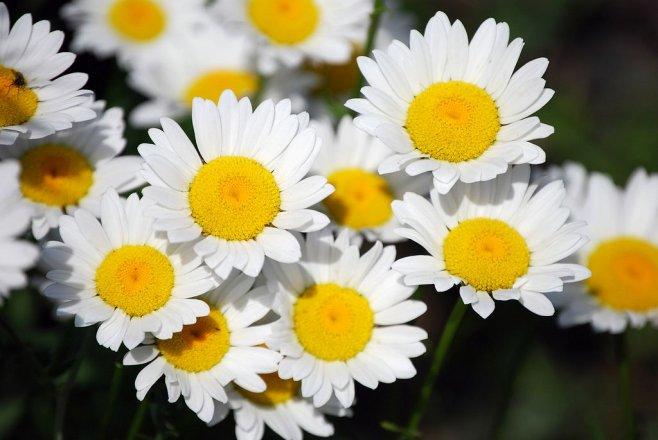 Keře a okrasné květiny na podzim