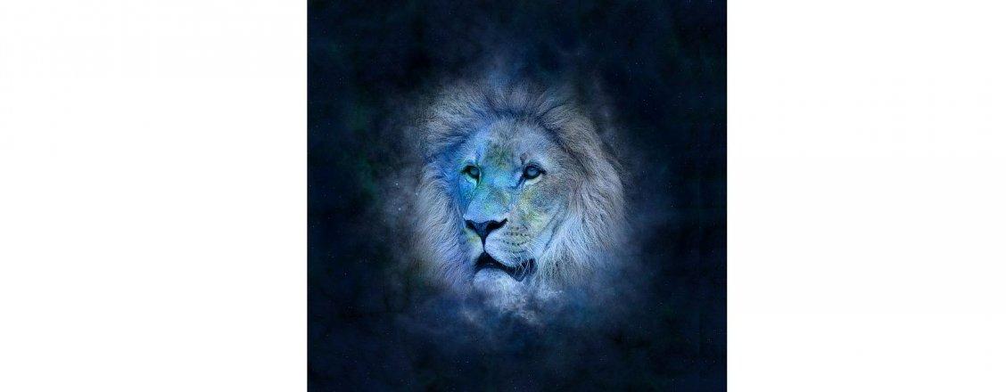 Lev a zdraví