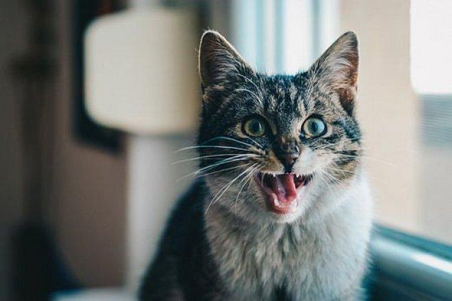Jak se správně starat o chrup kočky