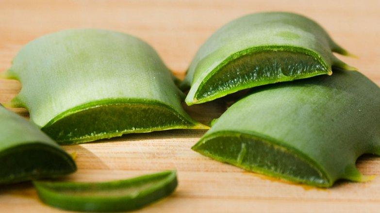 Aloe vera: První pomoc z květináče