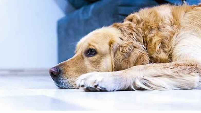4 nejběžnější onemocnění psů