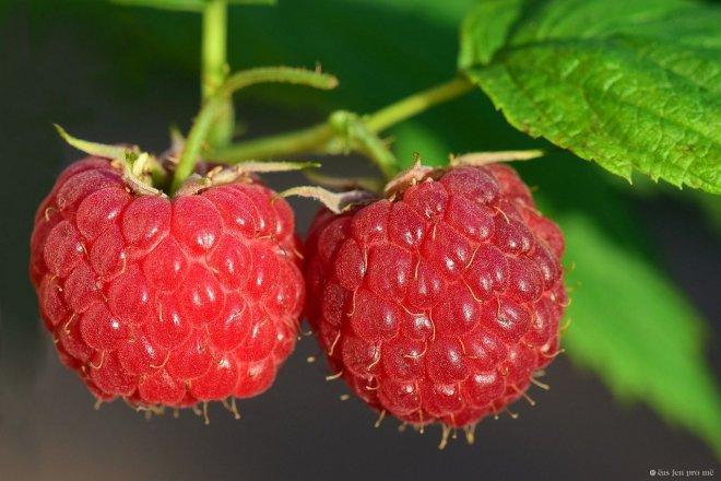Maliny: Patří k létu, nádherně voní a sladce chutnají…