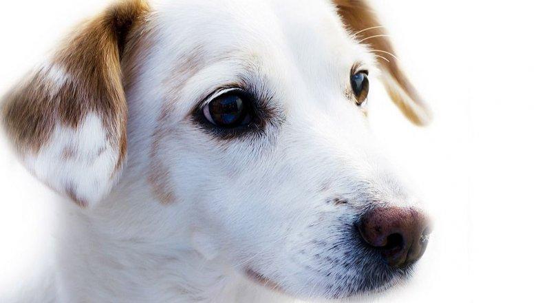 Vyznáte se v krmivech pro psy?