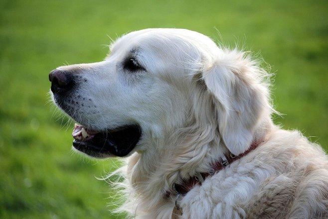 Na co si dát pozor při krmení psů